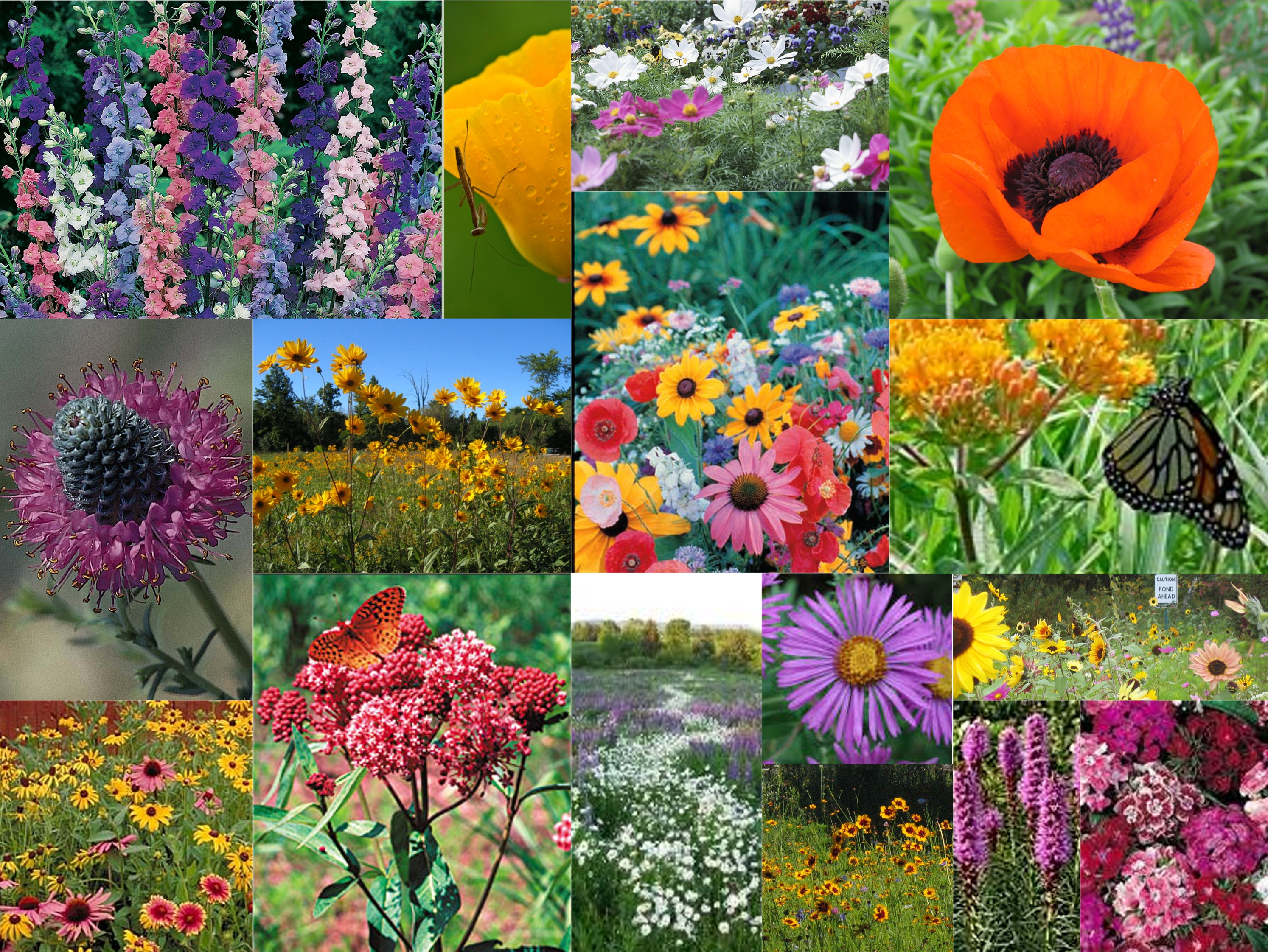 a deluxe wildflower seed mix with natives rare species amp more